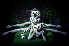 lemur animals contortion walkabout